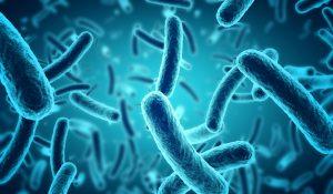 avremo un futuro senza antibiotici int2
