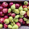 Agricoltura biodinamica: i prodotti biodinamici sono di migliore qualità?